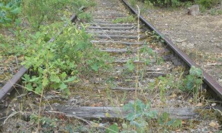 Ein altes Hüttenwerk, Holzmonster und Schienen im Wald